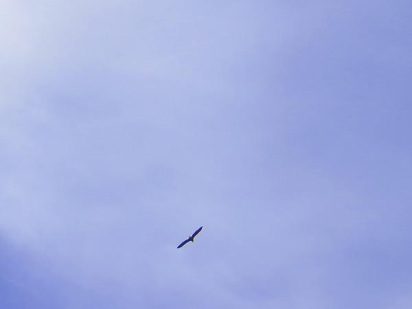 Versailles Eagle Paddle